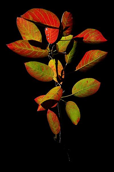 leaves 13-10-09 2-400px